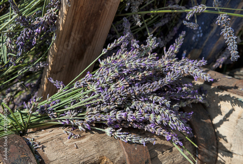 Lavender flowers  captured on a lavender festival in south of France © Sunnydays