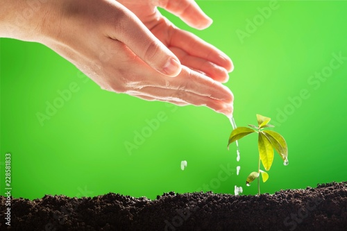 Leinwandbild Motiv Plant.
