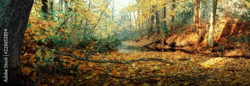 autumn landscape - 228652854