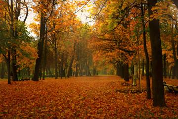 bright, beautiful, colorful autumn park