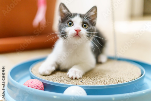 Cute Baby Cat Playing At Home © radub85