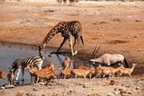 Giraffa al Parco Nazionale Etosha in Namibia Africa