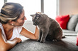 Nice Grey Cat with woman on sofa