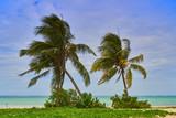 Palmeras en playa de Guardalavaca,Cuba