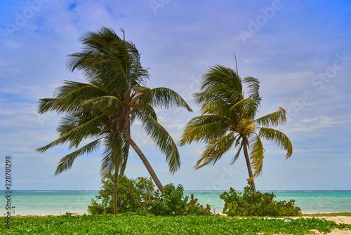 Palmeras en playa de Guardalavaca,Cuba - 228701298