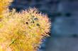 Yellow Flowers closeup view