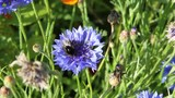 Medium shot of bee pollinating on flower - 228714639