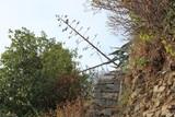 Scalinata in pietra tra rovi e alberi
