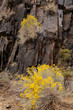 Yellow wild flower growing out of sand and rock