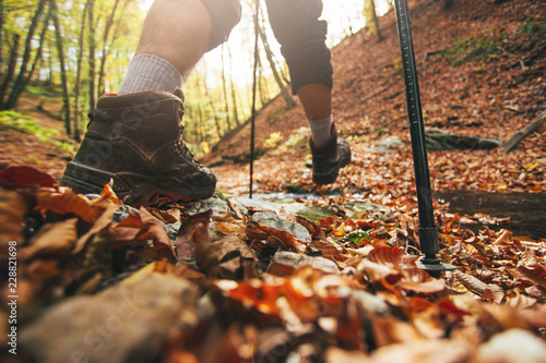 Close up of hiker legs with trekking poles in autumn forest - 228821698