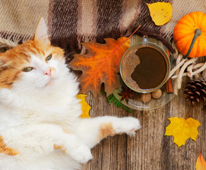 Lazy cat sleeps on fall plaid