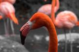 Flamingos schwarz weiß