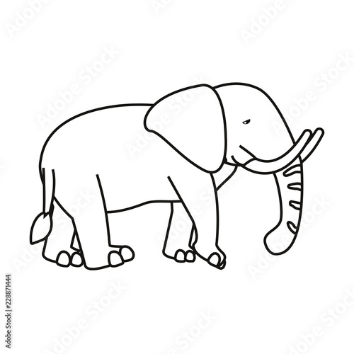 Poster elephant animal on white background