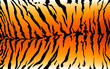 stripe animals jungle tiger fur texture pattern orange yellow black