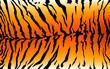 stripe animals jungle tiger fur texture pattern orange yellow black