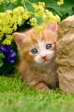 Baby kitten beside a rock in a flowery garden