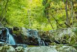 自然林・渓流の始まり