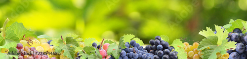 Grapes from your favorite garden - 228944692