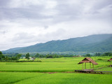 a little hut in green rice pad with mountain background - 228949626