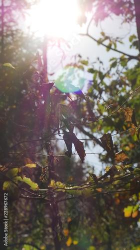 Blätter im Gegenlicht - 228967672
