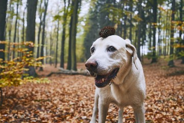 Dog in autumn forest