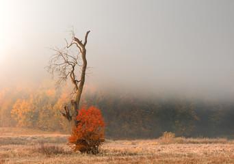 Jesienne Klimaty  © jesiotr9