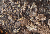 dirty earth soil background - 228983274