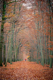 Pathway in the autumn forest, Germany - 228983857