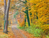 Pathway in the autumn forest - 228990048