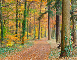 Pathway in the autumn forest - 228990081