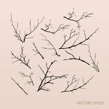 Tree branches. Vector illustration. Tree set
