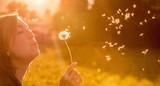 Junges Mädchen bläst Samen einer Pusteblume, Sonnenuntergang im Herbst mit Textfreiraum