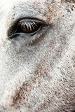 Stunning Horses Eye And Fur Coat Detail - 229004214