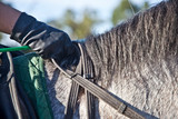 Horse Rider Clasping Reins Of Horse - 229004269