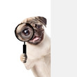 Leinwanddruck Bild - Puppy looks through a magnifying lens. Isolated on white background