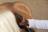 Child grooming horse with brush