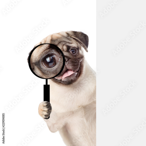 Leinwanddruck Bild Puppy looks through a magnifying lens. Isolated on white background