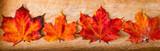 Herbst Blätter für Webseiten, Karten und mehr