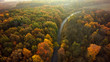 Autumn forest drone aerial shot, Overhead view of foliage trees and road