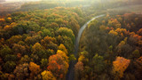 Autumn forest drone aerial shot, Overhead view of foliage trees and road - 229020247