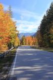 Fahrbahn im Herbst
