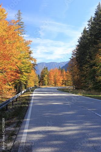 Fahrbahn im Herbst © rupbilder