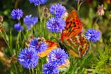 Wildblumen, Wiese,  artenvielfalt