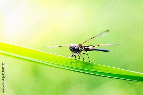 Leinwandbild Motiv The dragonfly in blur background