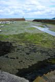 Port de Binic à marée basse en Bretagne dans les côtes d'Armor - 229049621
