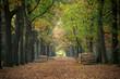 Herfstkleuren tekenen een prachtig bospad