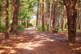 Sylt Wald am Strand - 229076488