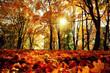 Leinwandbild Motiv Goldener Herbst