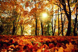 Goldener Herbst - 229085469