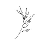 Twig in black and white. Flower ink sketch. Isolated on white background. Branch of beautiful hand-drawn silhouette